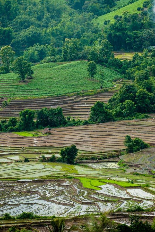 El arroz de la terraza coloca el fondo natural imagen de archivo libre de regalías