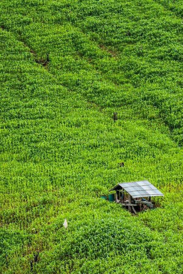 El arroz de la terraza coloca a Mae Chaem District Chiang Mai, Tailandia imagen de archivo