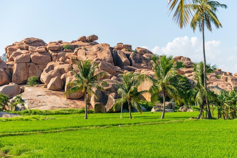 El arroz verde claro coloca en Hampi la India contra un contexto de a fotos de archivo