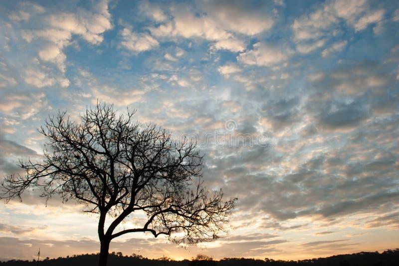 El arte de formar un árbol tropical en la estación del invierno Árbol muerto abstracto Nubes y fondos fantásticos del cielo de la imagen de archivo