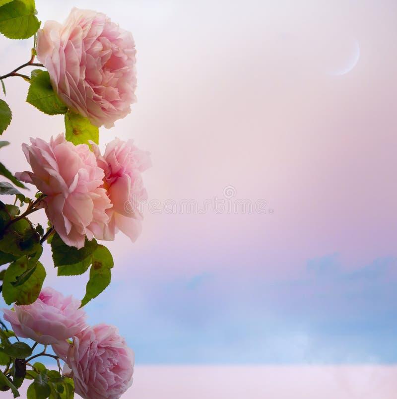 El arte florece la tarde romántica de las rosas en el lago park fotografía de archivo