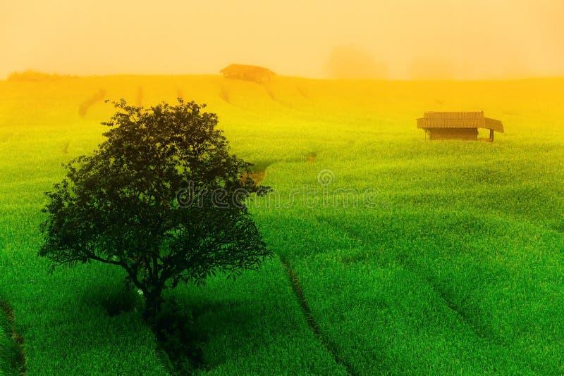 El asiático camina campo del arroz imagen de archivo