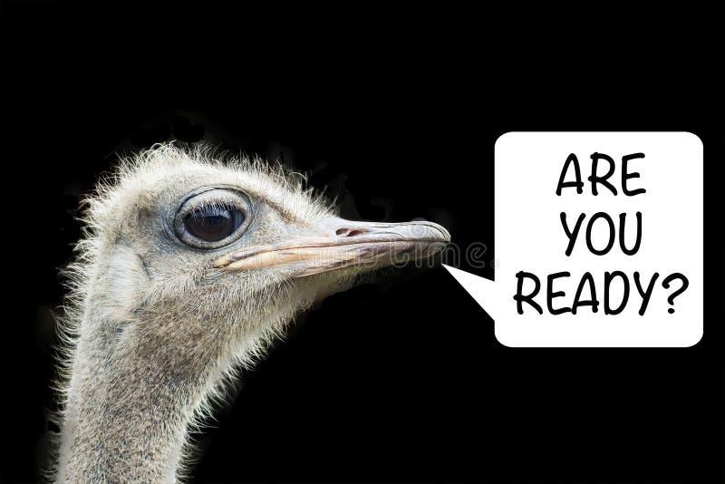 El avestruz sería ideal para los antecedentes y la publicidad ¿Está listo? imagenes de archivo