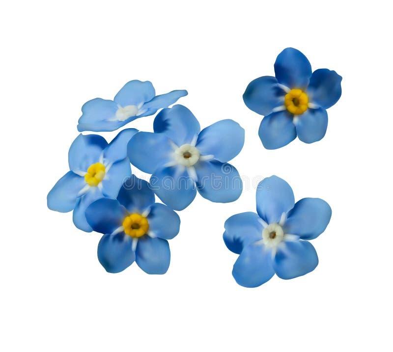 El azul me olvida no las flores de la primavera Sistema decorativo del vector de los elementos libre illustration
