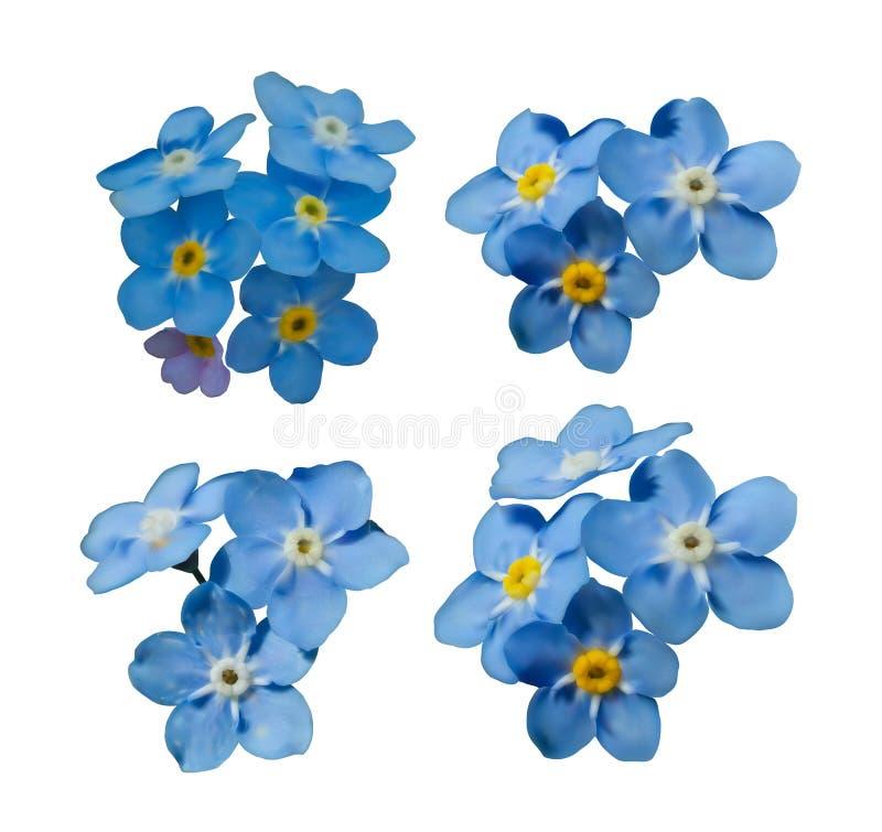El azul me olvida no las flores de la primavera Sistema decorativo del vector de los elementos ilustración del vector