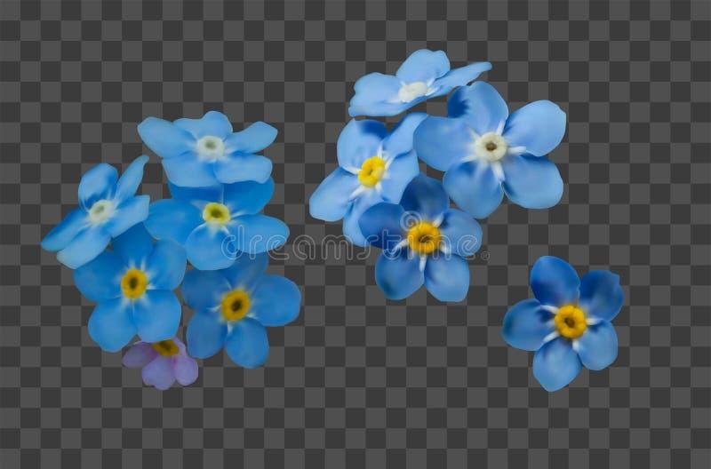 El azul me olvida no las flores de la primavera Sistema decorativo del vector de los elementos stock de ilustración