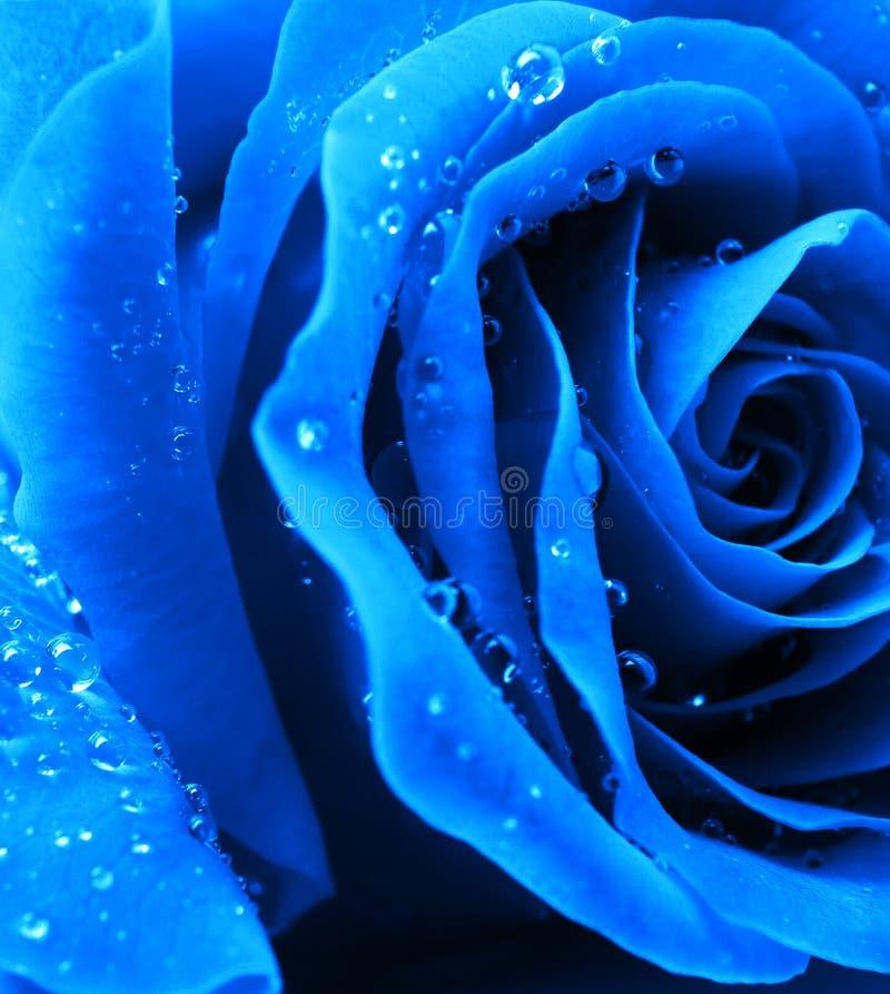 El azul se levantó fotos de archivo