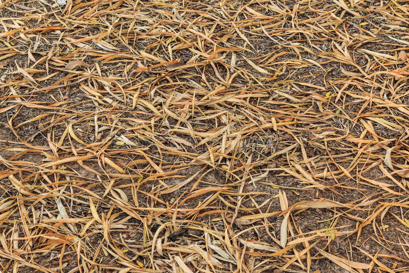 El bambú seco deja textura marrón de torneado en la tierra fotos de archivo libres de regalías