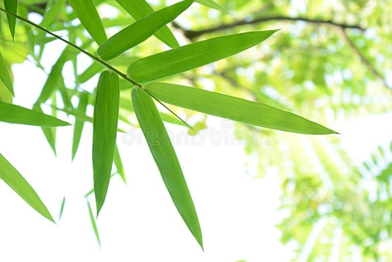 El bambú verde sale del marco fotos de archivo