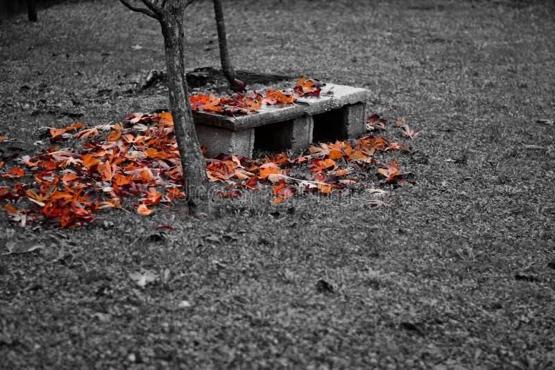 El banco cubrió por las hojas de otoño imagenes de archivo