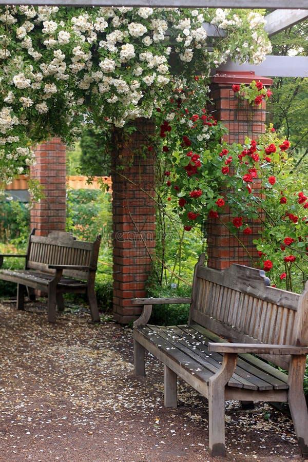 El banco del jardín de Uppsala con las rosas parquea en Suecia fotos de archivo