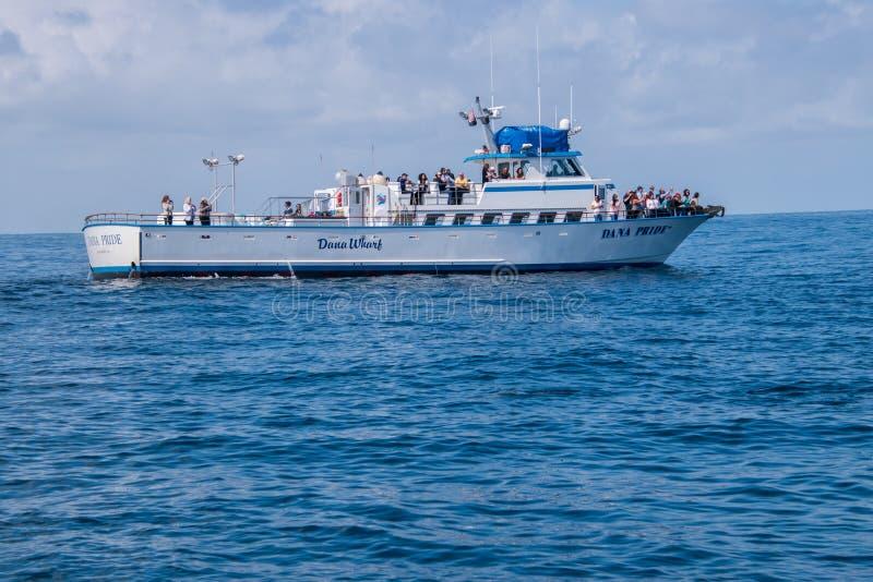 El barco de observación de la ballena con los turistas está tomando imágenes de delfínes en él es arco imagenes de archivo