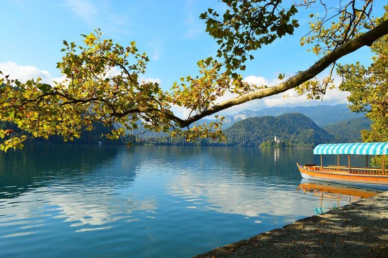 El barco a través del árbol sobre el lago sangró Eslovenia imagen de archivo
