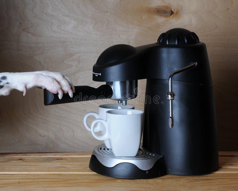 El barista dálmata prepara el café Dog& x27; pata de s en la manija de la máquina de café express fotografía de archivo