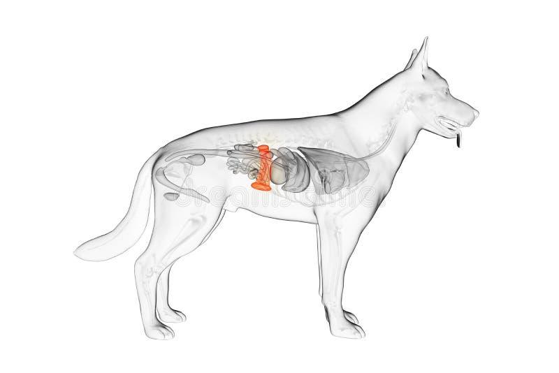 El bazo canino stock de ilustración
