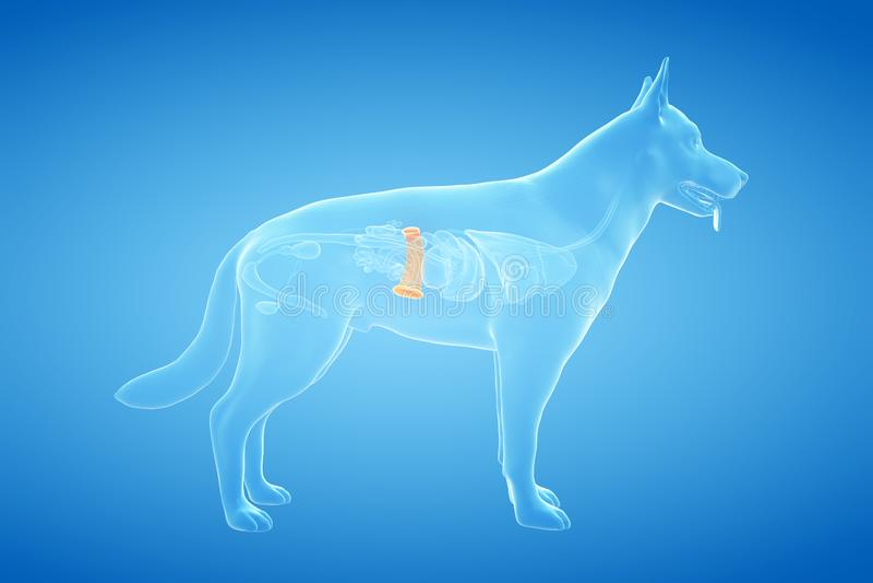 El bazo canino libre illustration