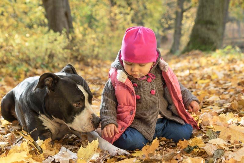 El bebé está jugando con el terrier de Staffordshire americano en parque imagenes de archivo