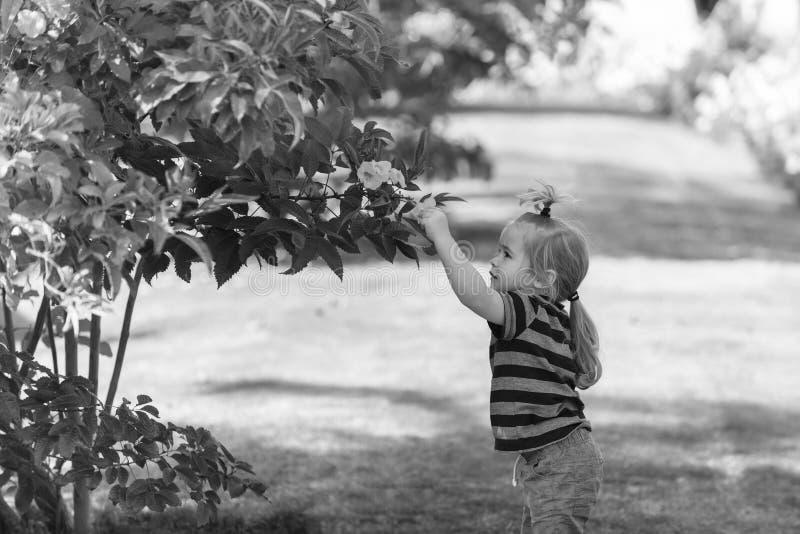 El bebé lindo que escoge la floración amarilla florece de arbustos fotos de archivo libres de regalías