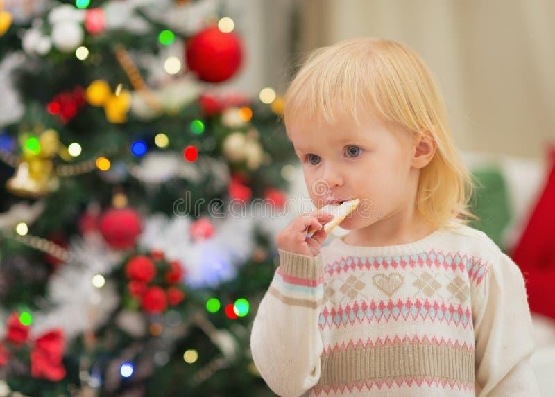 El bebé que come las galletas de la Navidad acerca al árbol de navidad foto de archivo