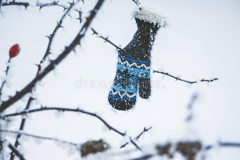 El bebé que el guante cuelga en una rama de un salvaje subió en un day_ del invierno fotografía de archivo