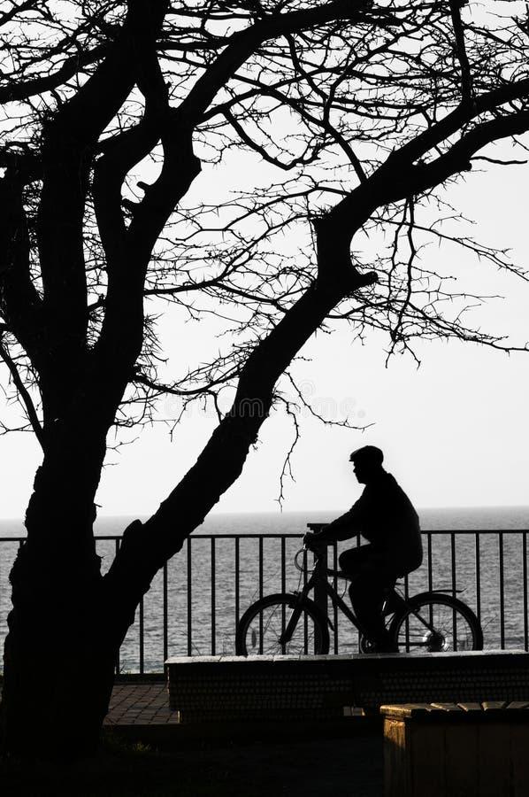El bicyclist y el árbol - siluetas. foto de archivo