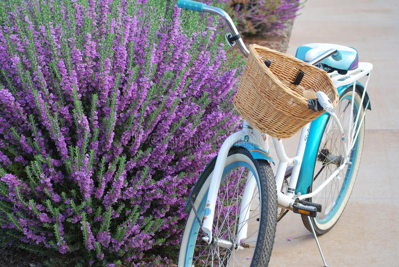 El Biking por el arbusto del sabio púrpura fotografía de archivo libre de regalías