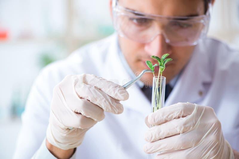 El bioquímico de sexo masculino que trabaja en el laboratorio en las plantas foto de archivo libre de regalías