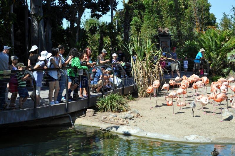 El Birdwatching en el parque zoológico de San Diego fotos de archivo libres de regalías