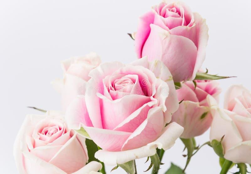 El blanco y el color de rosa se levantaron imagenes de archivo
