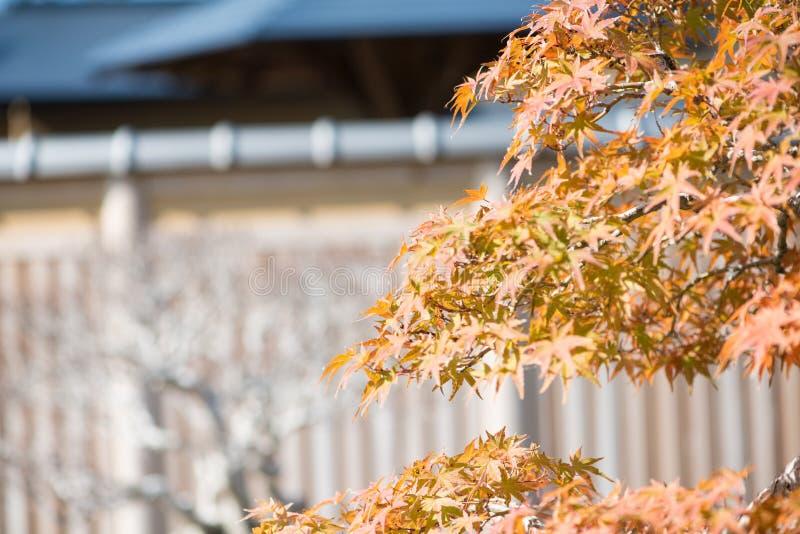 El bonsai del arce japon?s se va en la estaci?n del oto?o fotografía de archivo