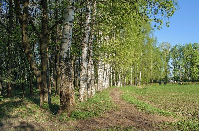 El borde del bosque temprano por la mañana fotos de archivo libres de regalías