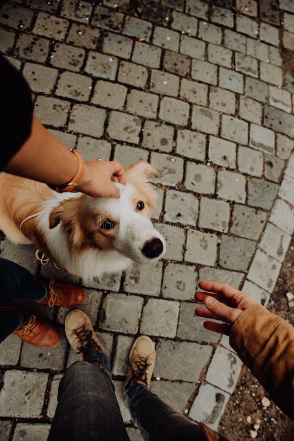 El border collie del perrito da a pata el Giel foto de archivo libre de regalías