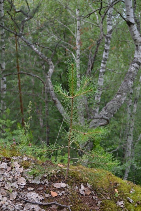 El bosque imagen de archivo