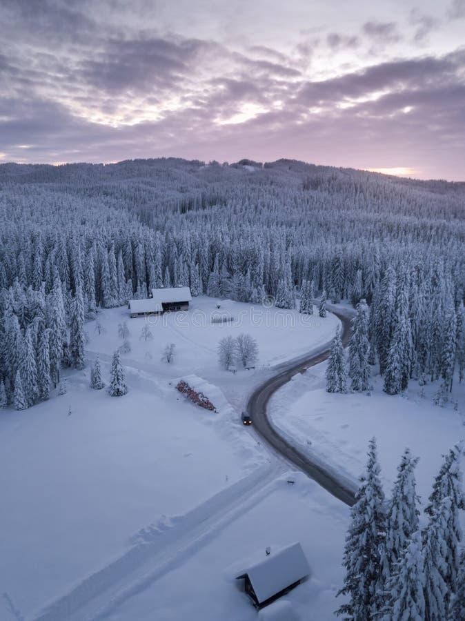 El bosque alpino del invierno en Pokljuka Eslovenia cubrió en nieve en el amanecer imagen de archivo