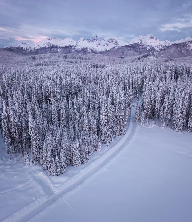 El bosque alpino del invierno en Pokljuka Eslovenia cubrió en nieve en el amanecer foto de archivo libre de regalías