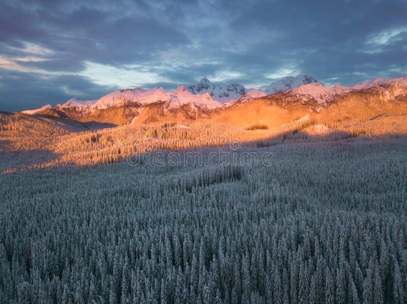 El bosque alpino del invierno en Pokljuka Eslovenia cubrió en nieve en el amanecer imagenes de archivo