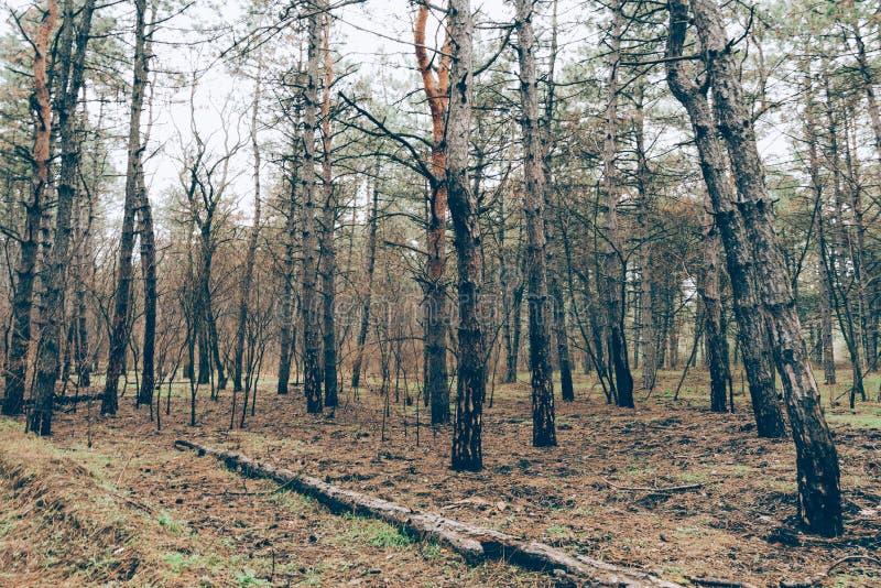 El bosque chamuscado fotos de archivo libres de regalías