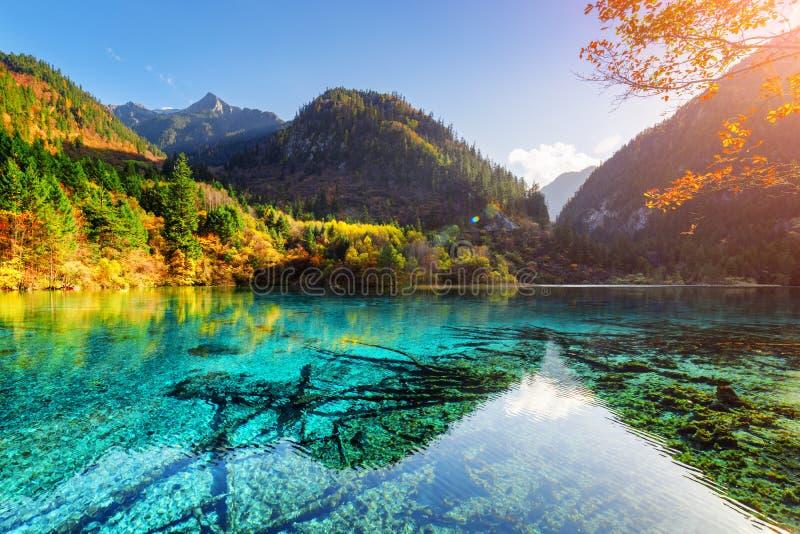 El bosque colorido reflejó en el agua azul del lago cinco flower fotos de archivo libres de regalías