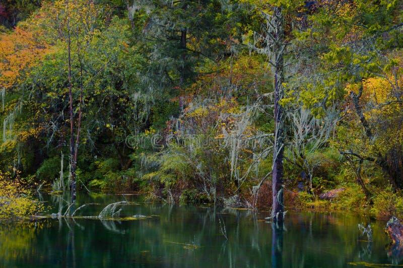 El bosque colorized cerca del lago fotografía de archivo