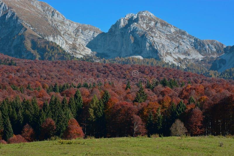 el bosque da vuelta rojo foto de archivo libre de regalías