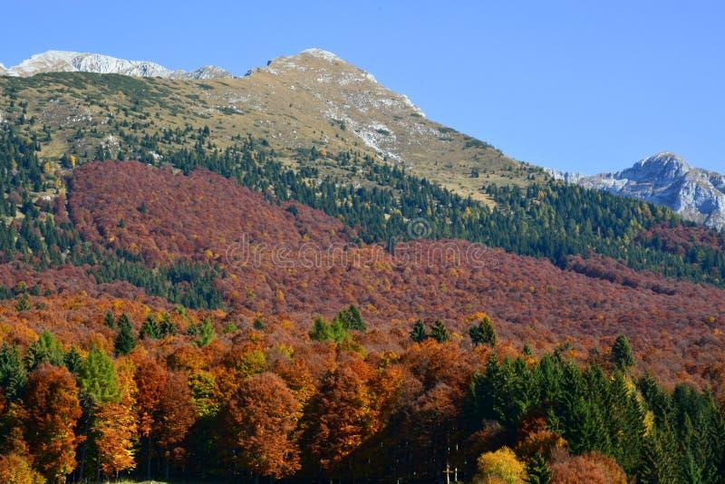 el bosque da vuelta a rojo en otoño foto de archivo libre de regalías
