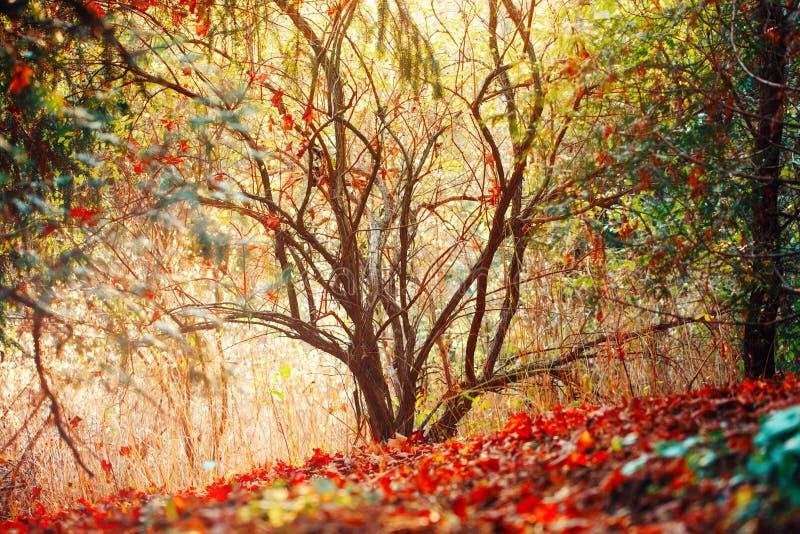 El bosque de la caída del otoño, los colores surrealistas de la fantasía ajardina con los árboles imagen de archivo
