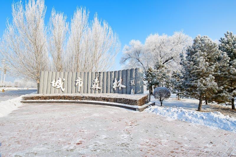 El bosque de la ciudad en invierno fotos de archivo libres de regalías