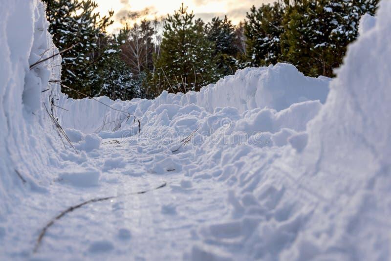 El bosque de la nieve de las nieves acumulada por la ventisca sigue invierno imagenes de archivo