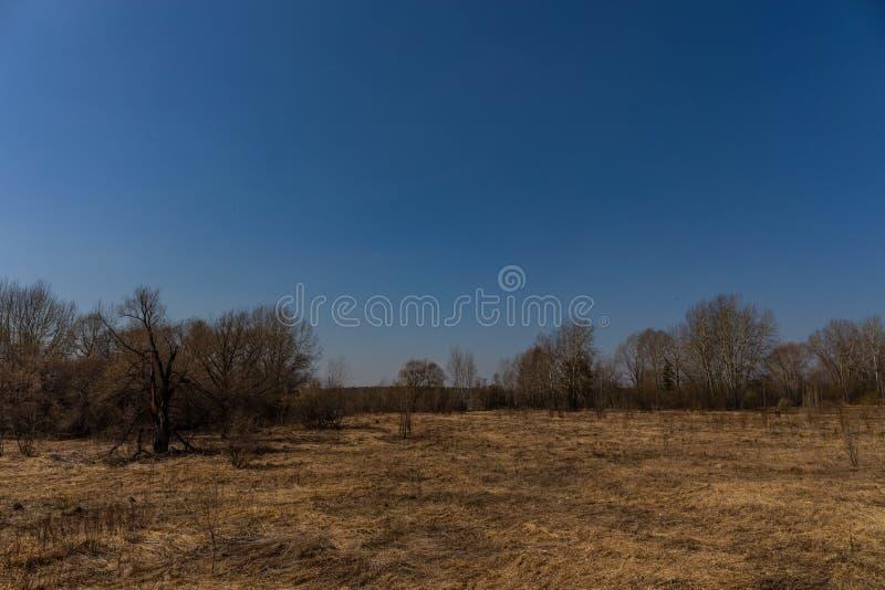 El bosque de la primavera con follaje no todavía floreció en un parque natural en Rusia foto de archivo libre de regalías
