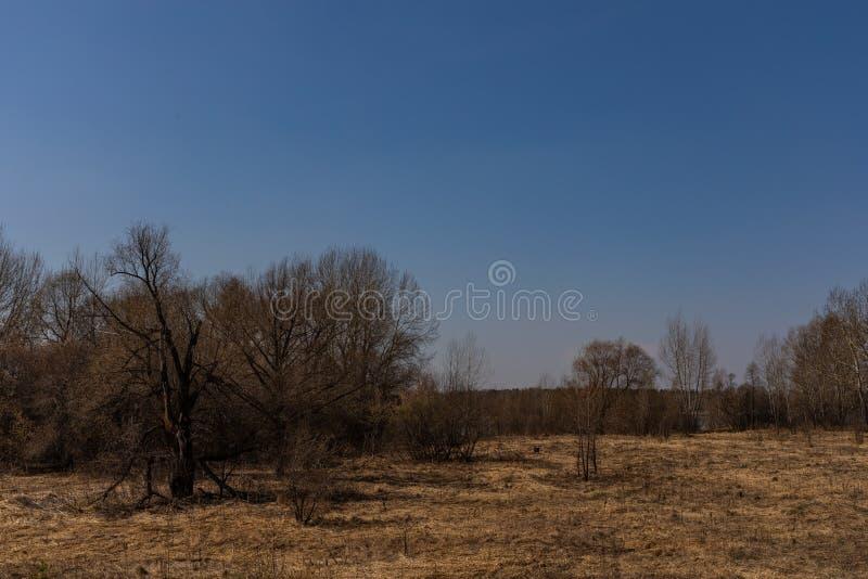 El bosque de la primavera con follaje no todavía floreció en un parque natural en Rusia fotografía de archivo