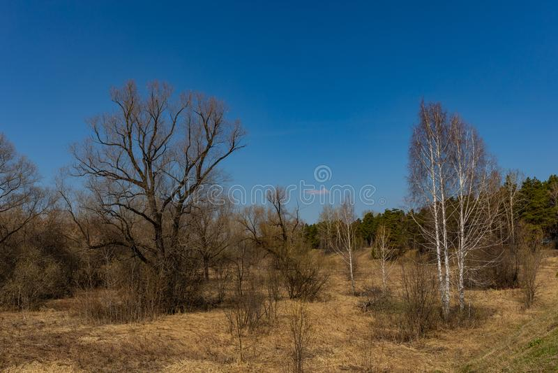 El bosque de la primavera con follaje no todavía floreció en un parque natural en Rusia imagen de archivo