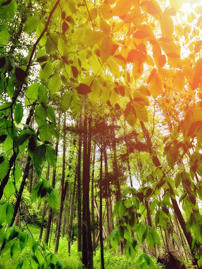 El bosque de las caídas de Bushkill foto de archivo