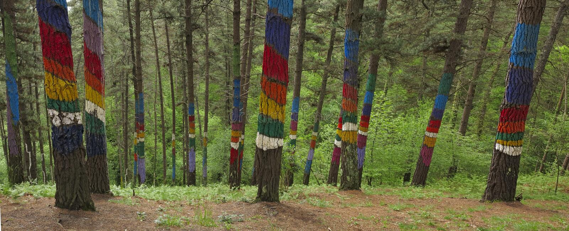 El bosque de Oma, Cortézubi, Bizkaia imagen de archivo libre de regalías
