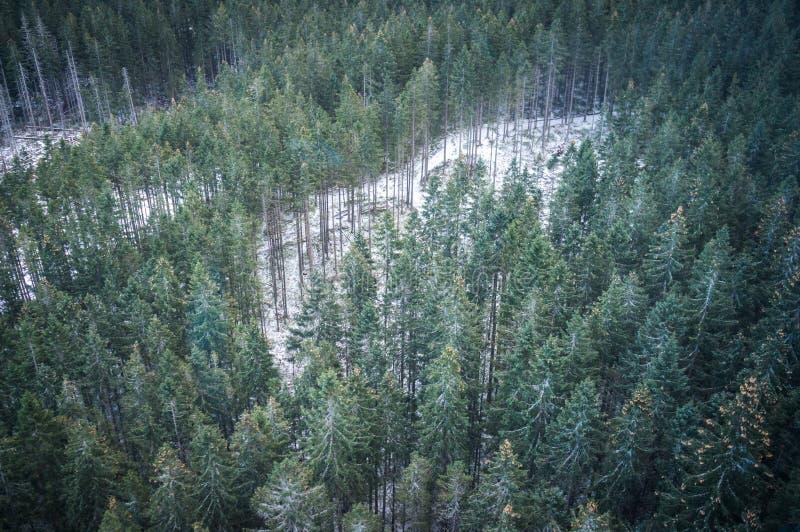 El bosque del invierno en paisaje de las montañas imágenes de archivo libres de regalías